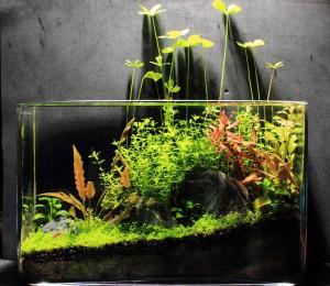 malenkij-akvarium_3